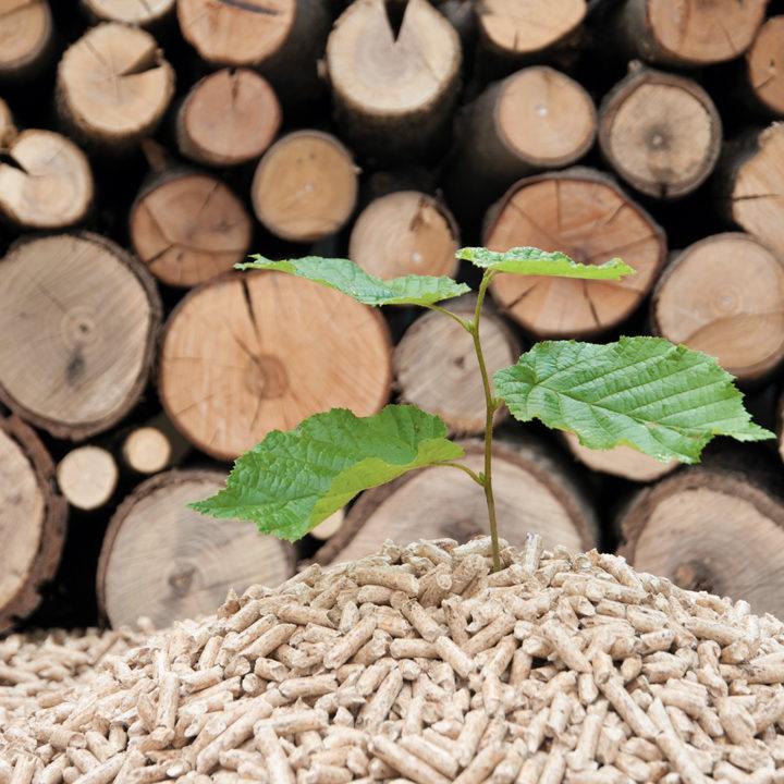 Heizen mit Holz – umweltfreundlich oder nicht? Der Olymp Check.