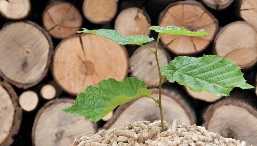 Ist Heizen mit Holz umweltfreundlich ?